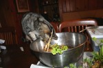cats, cooking with herbs